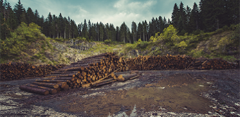 Trade-offs between economic growth and deforestation