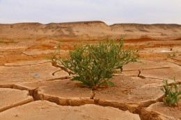 Population dynamics and climate change - Round Table Discussion with Raya Muttarak - 15 October 2021 at 8 pm (CEST)